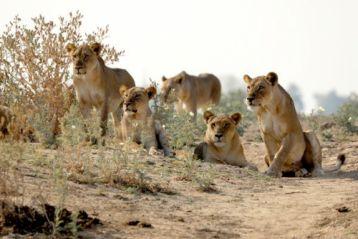 zambiai társkereső oldalak